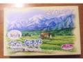 竹内製菓 おひさまやすらぎの安曇野チーズカットケーキ 箱5個