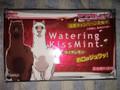 グリコ ウォータリングキスミント ライチレモン 箱8枚